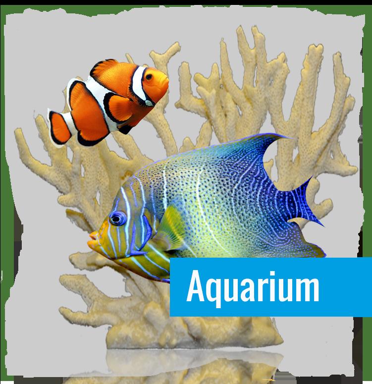 Dierenwinkel Harstduiven - Alles voor uw aquarium