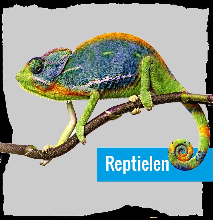 Dierenwinkel Hartsduiven - Reptielen